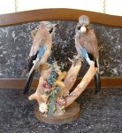 taxidermy: jays